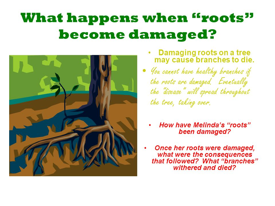 What happens when roots become damaged