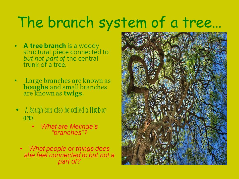 The branch system of a tree…