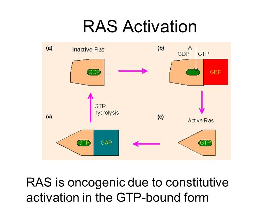 RAS Activation