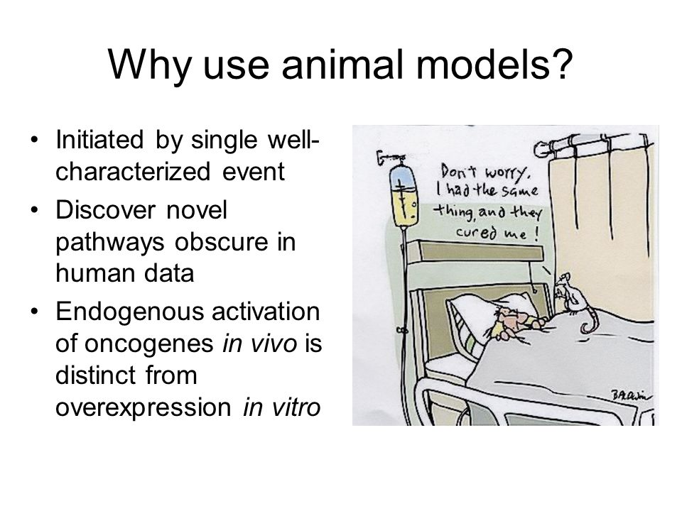 Why use animal models Initiated by single well-characterized event