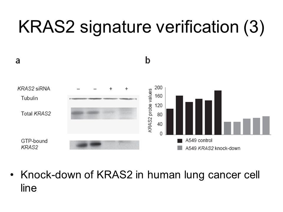 KRAS2 signature verification (3)