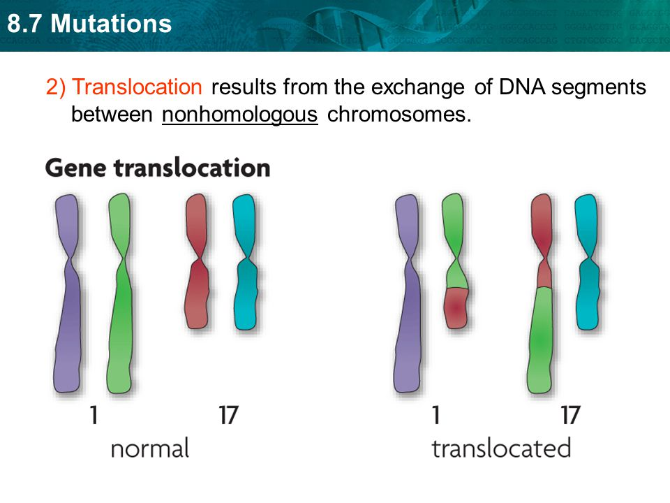 2) Translocation results from the exchange of DNA segments between nonhomologous chromosomes.