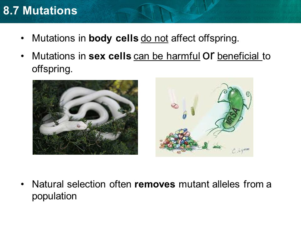 Mutations in body cells do not affect offspring.