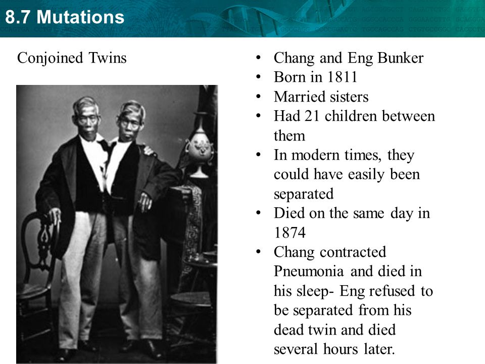 Conjoined Twins Chang and Eng Bunker. Born in 1811. Married sisters. Had 21 children between them.