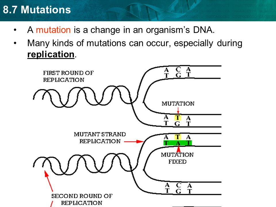 A mutation is a change in an organism's DNA.