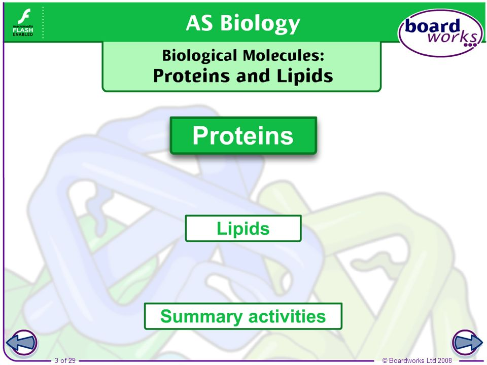 Boardworks AS Biology Biological Molecules: Proteins and Lipids