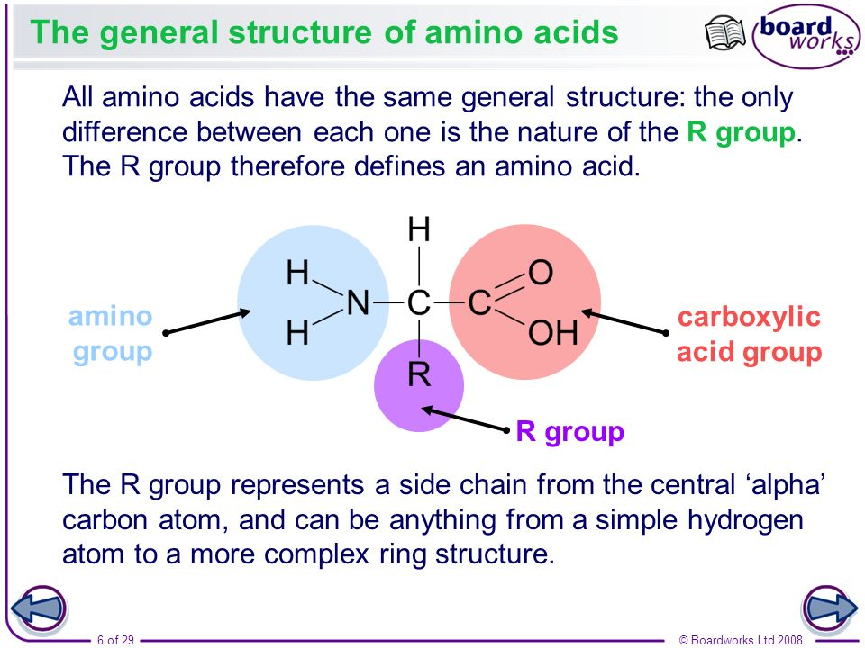 The general structure of amino acids