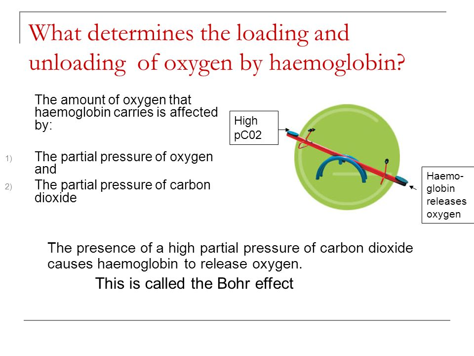 What determines the loading and unloading of oxygen by haemoglobin