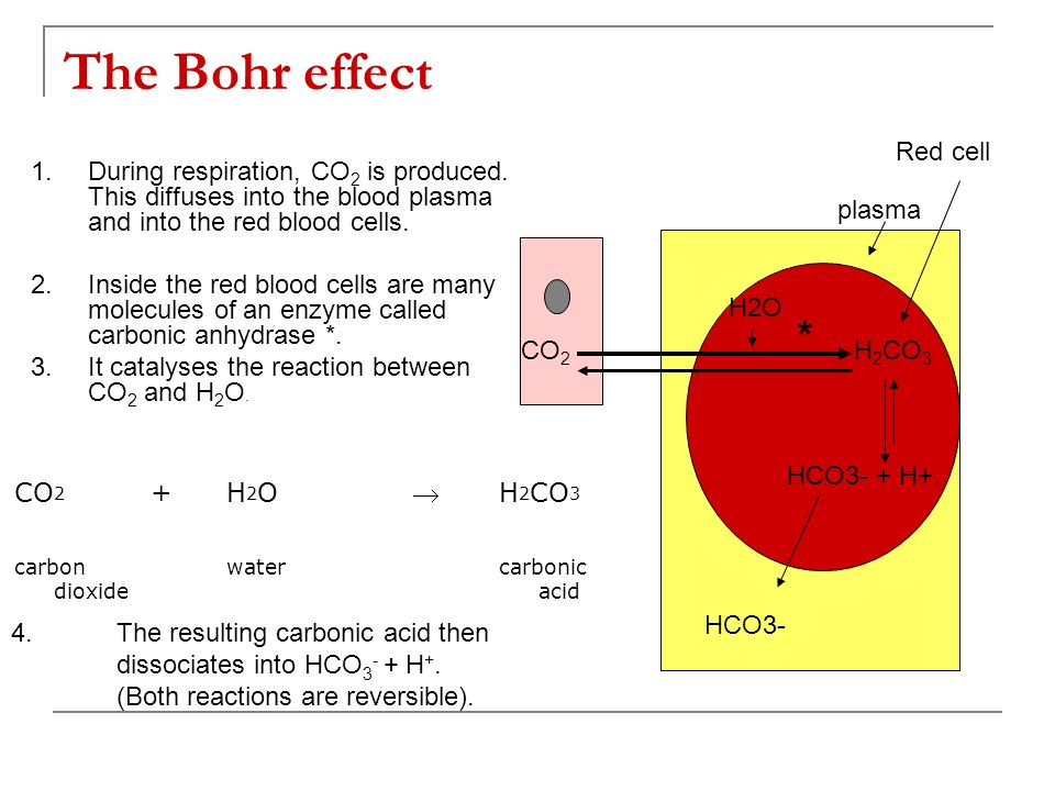 The Bohr effect * Red cell