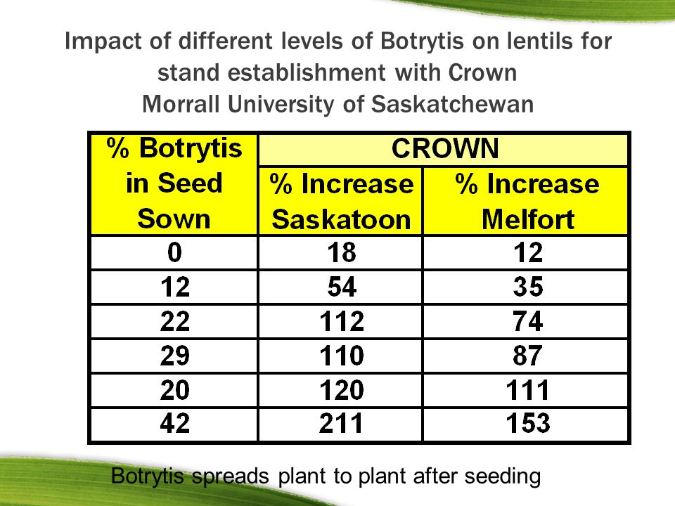 Impact of different levels of Botrytis on lentils for stand establishment with Crown Morrall University of Saskatchewan