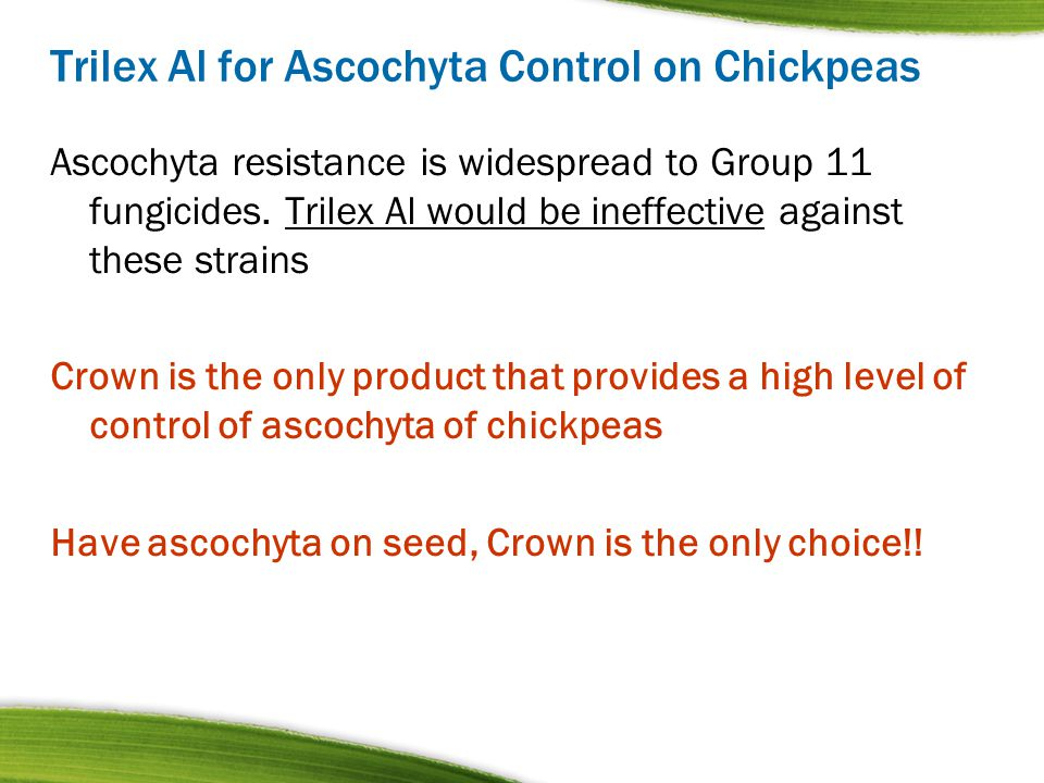 Trilex Al for Ascochyta Control on Chickpeas