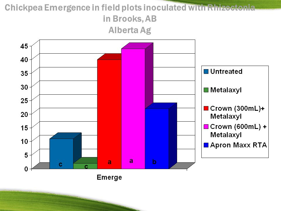 Chickpea Emergence in field plots inoculated with Rhizoctonia in Brooks, AB Alberta Ag