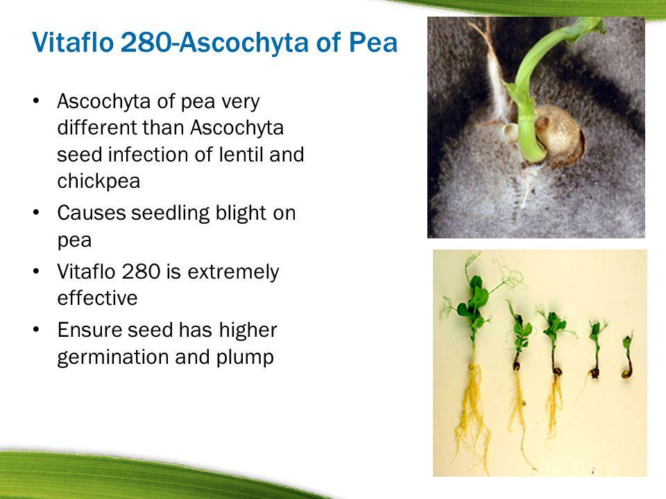 Vitaflo 280-Ascochyta of Pea