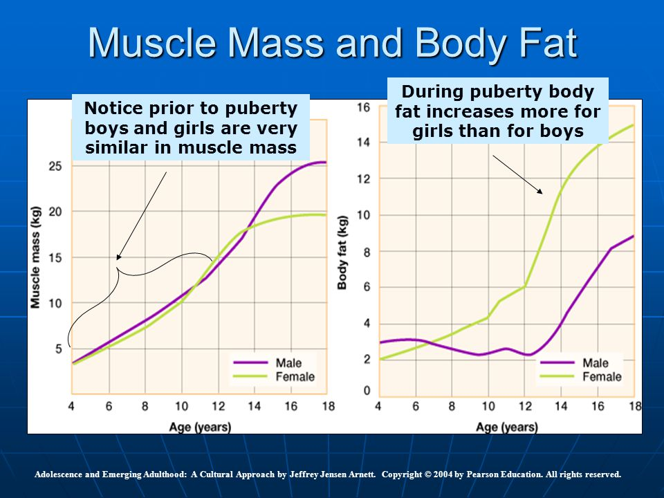 Muscle Mass and Body Fat
