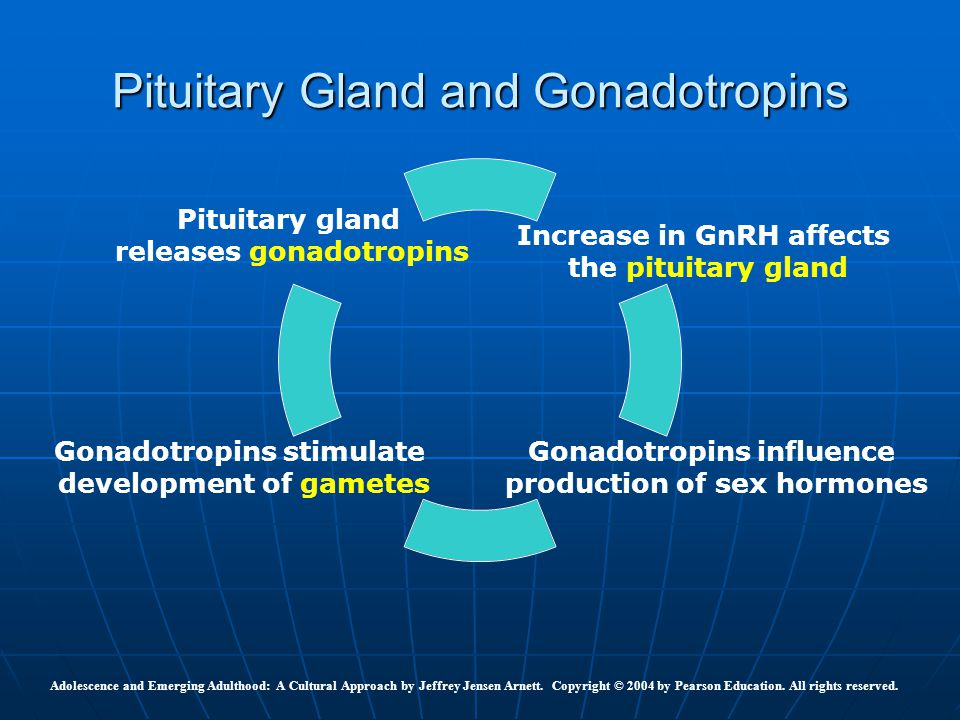 Pituitary Gland and Gonadotropins