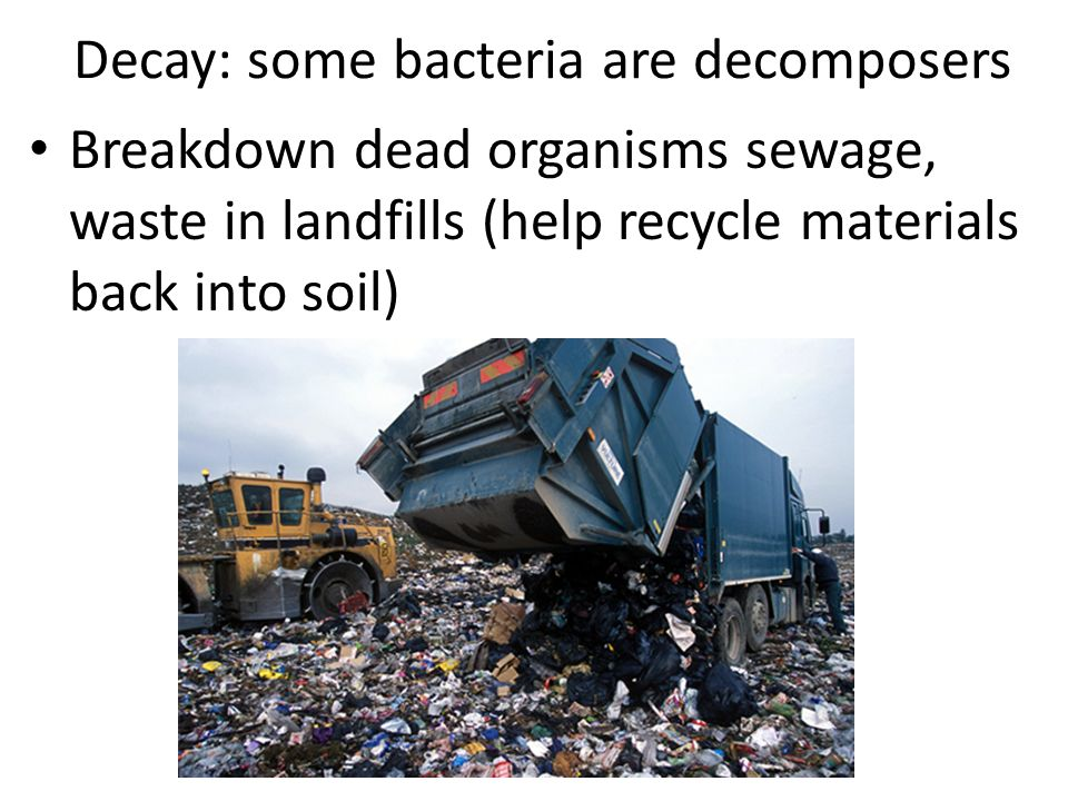 Decay: some bacteria are decomposers