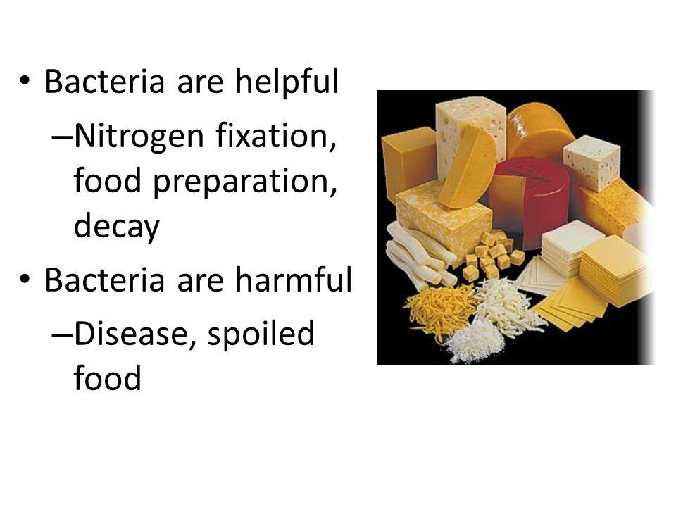 Bacteria are helpful Nitrogen fixation, food preparation, decay.