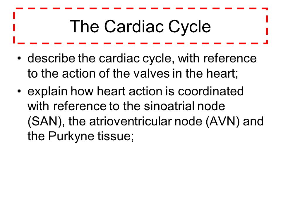 The Cardiac Cycle describe the cardiac cycle, with reference to the action of the valves in the heart;
