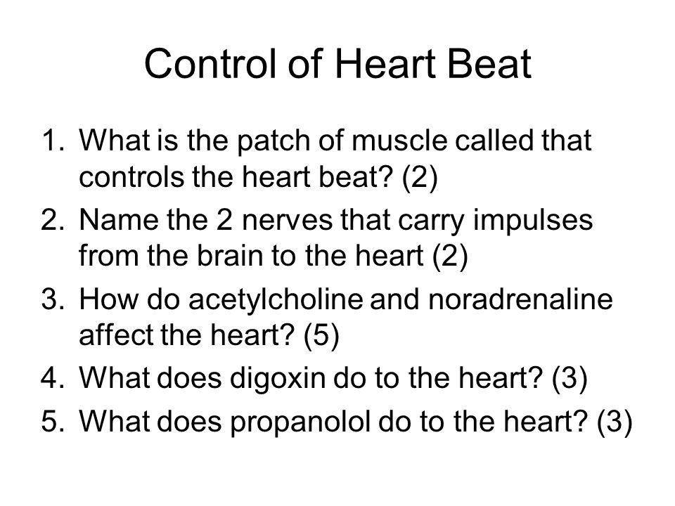 Control of Heart Beat What is the patch of muscle called that controls the heart beat (2)