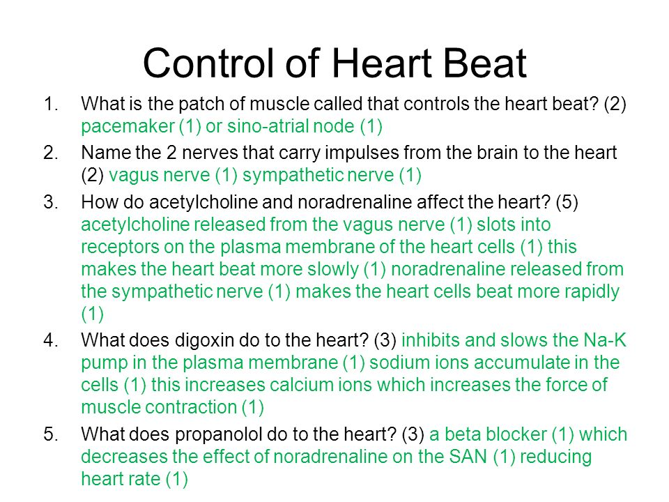 Control of Heart Beat What is the patch of muscle called that controls the heart beat (2) pacemaker (1) or sino-atrial node (1)