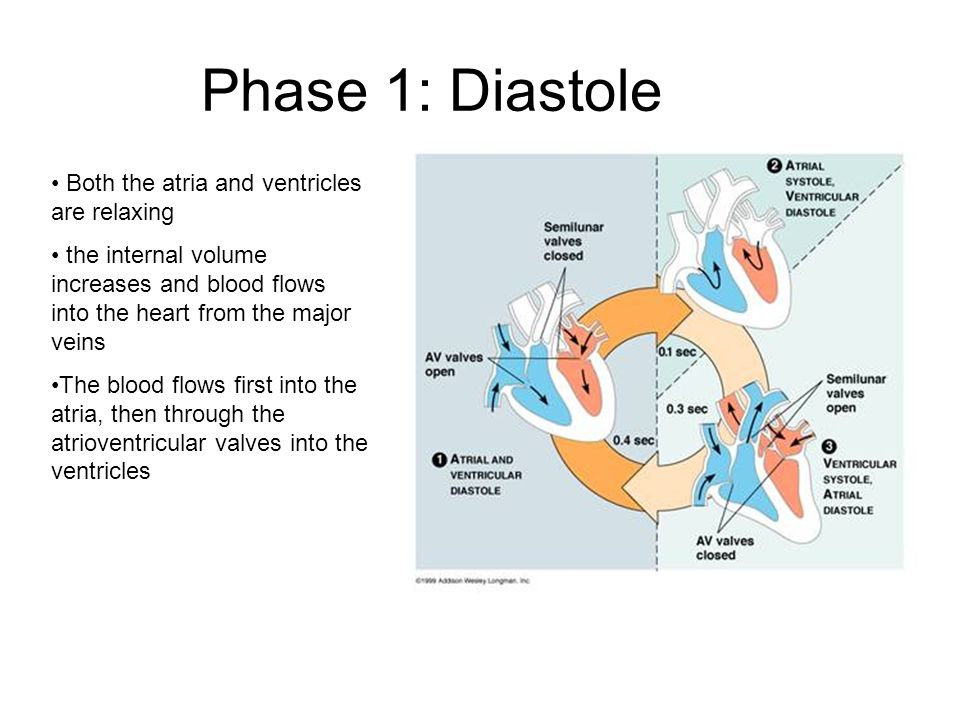 Phase 1: Diastole Both the atria and ventricles are relaxing