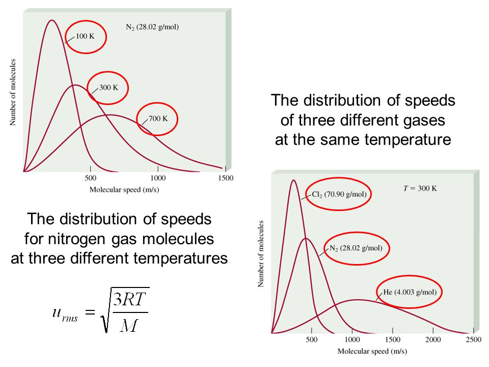 The distribution of speeds of three different gases
