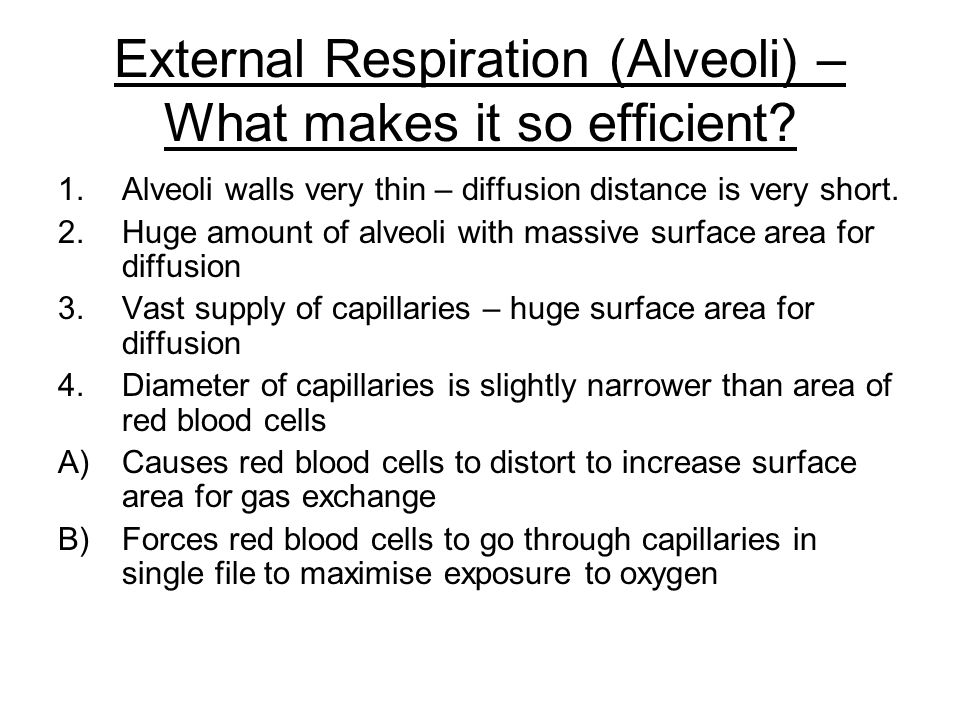 External Respiration (Alveoli) – What makes it so efficient