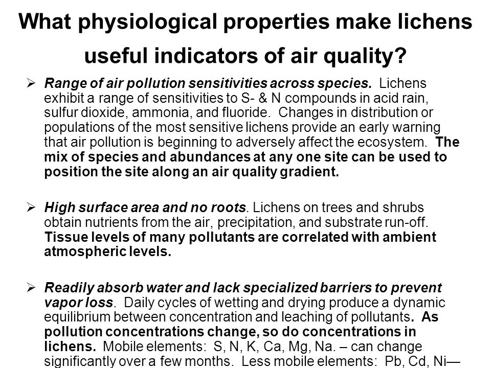 What physiological properties make lichens useful indicators of air quality
