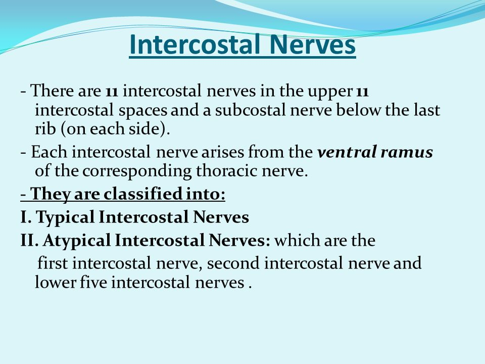 Intercostal Nerves - There are 11 intercostal nerves in the upper 11 intercostal spaces and a subcostal nerve below the last rib (on each side).