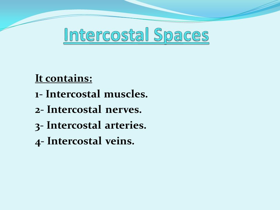 Intercostal Spaces It contains: 1- Intercostal muscles.
