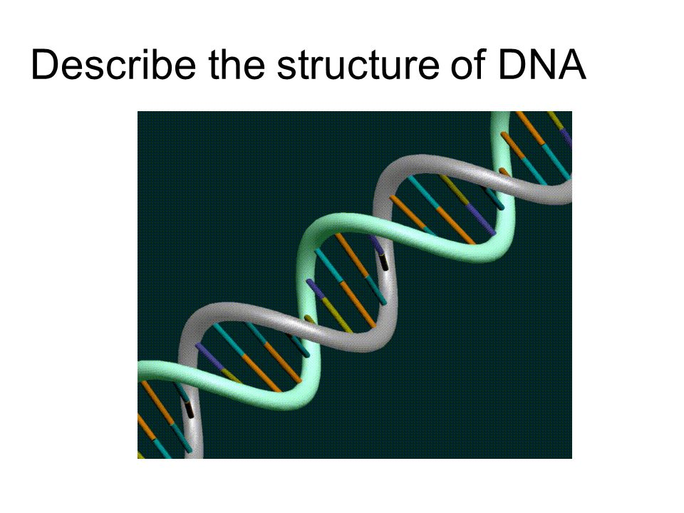 Describe the structure of DNA