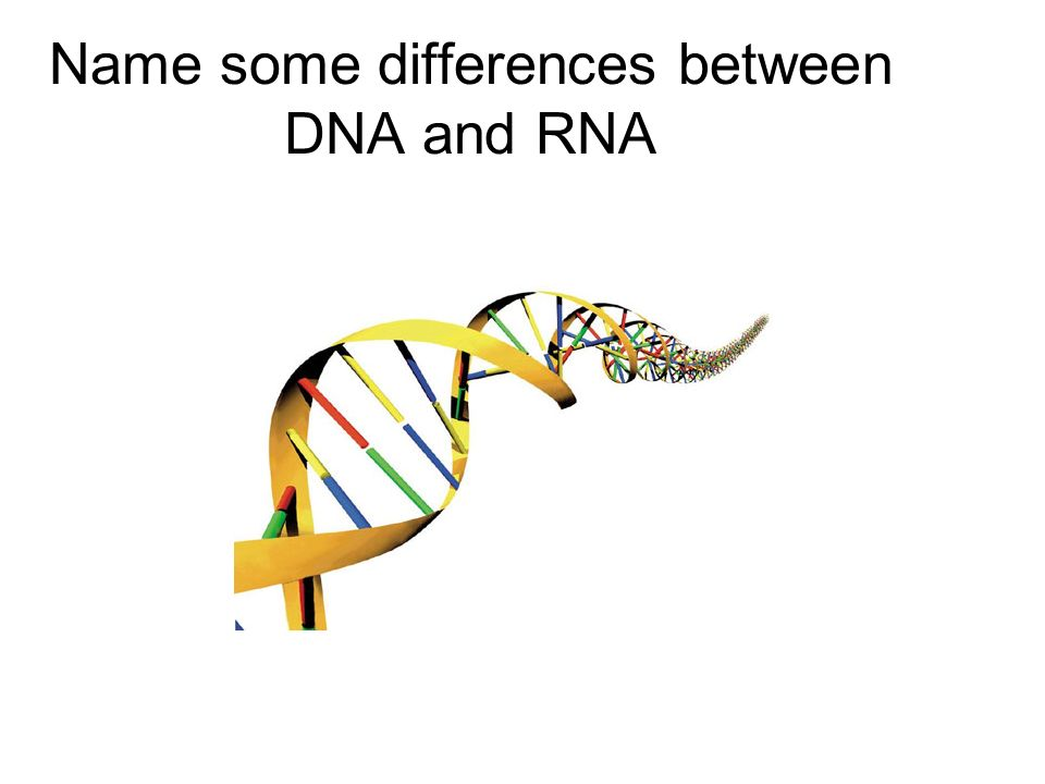Name some differences between DNA and RNA