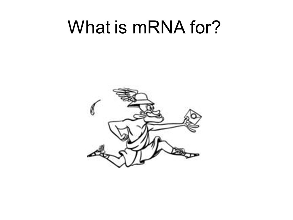 What is mRNA for