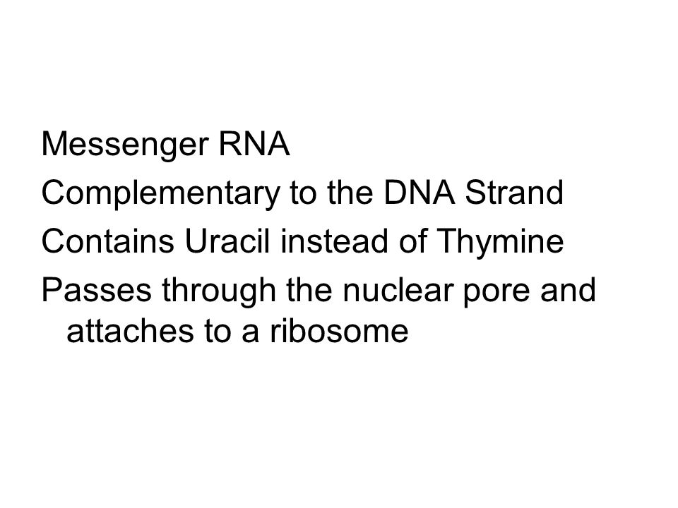 Messenger RNA Complementary to the DNA Strand. Contains Uracil instead of Thymine.