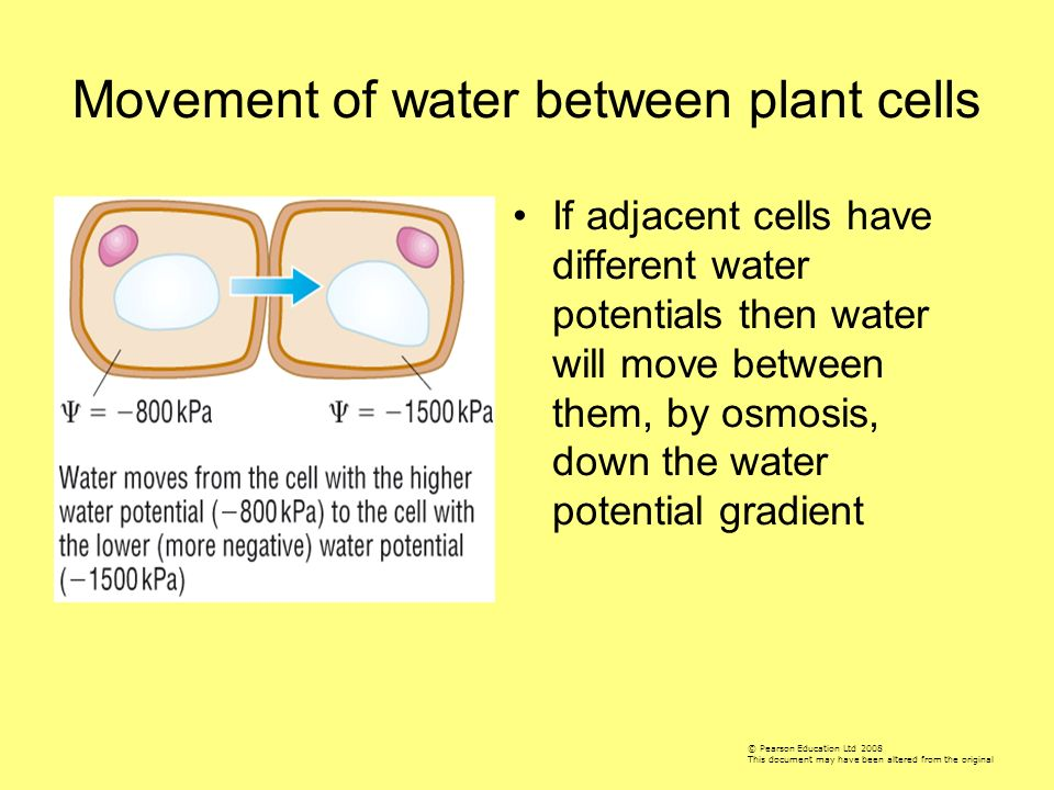 Movement of water between plant cells