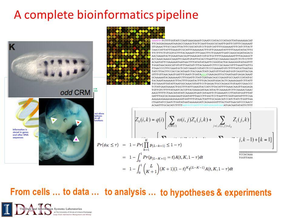 A complete bioinformatics pipeline