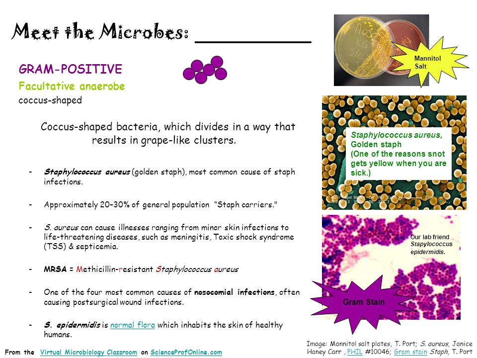 Meet the Microbes: ________