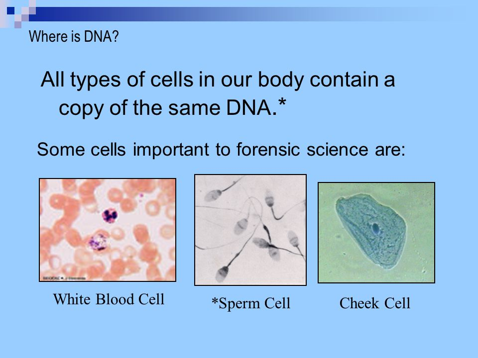All types of cells in our body contain a copy of the same DNA.*