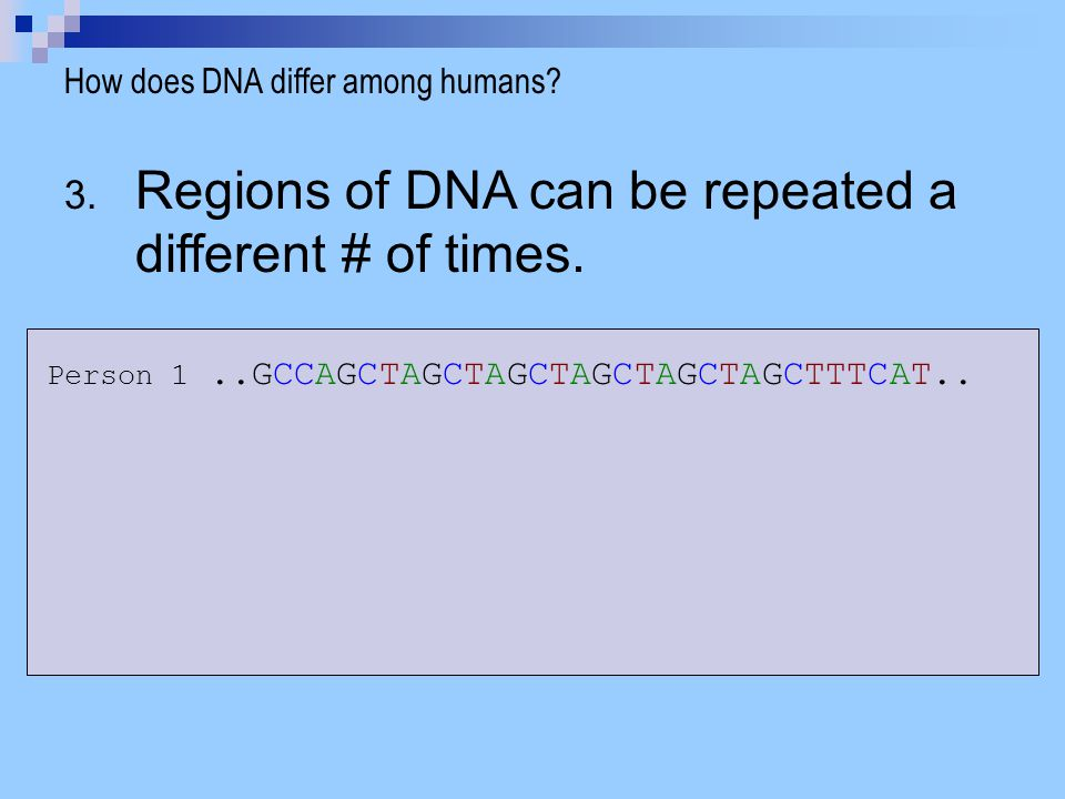 Regions of DNA can be repeated a different # of times.