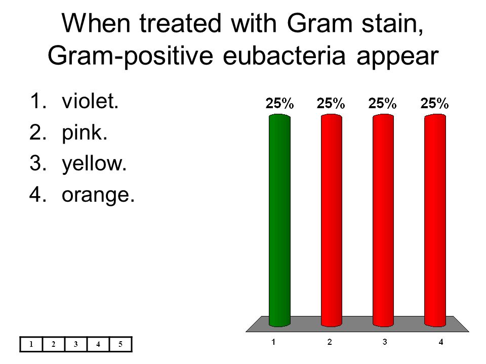 When treated with Gram stain, Gram-positive eubacteria appear