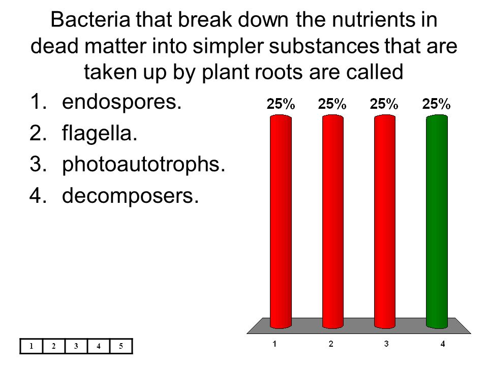 Bacteria that break down the nutrients in dead matter into simpler substances that are taken up by plant roots are called