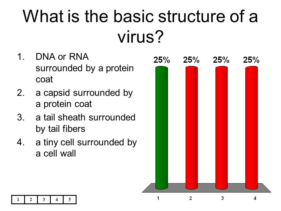 What is the basic structure of a virus