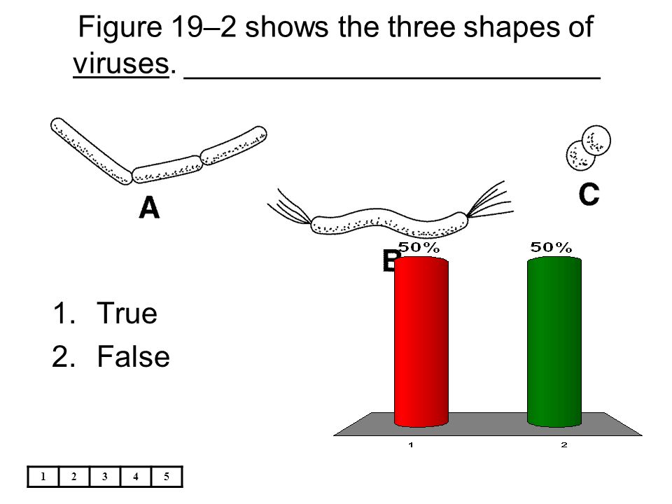 Figure 19–2 shows the three shapes of viruses