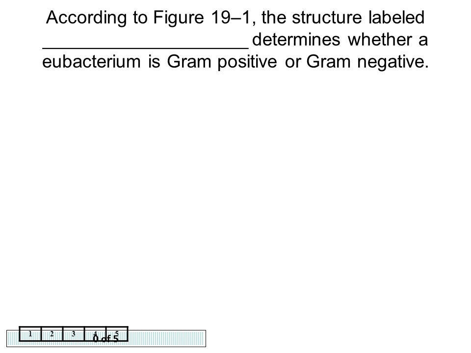 According to Figure 19–1, the structure labeled ____________________ determines whether a eubacterium is Gram positive or Gram negative.