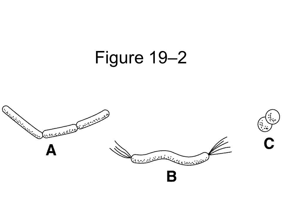 Figure 19–2