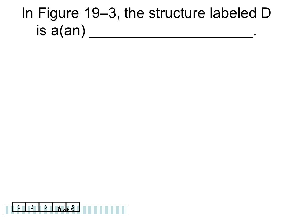 In Figure 19–3, the structure labeled D is a(an) ____________________.