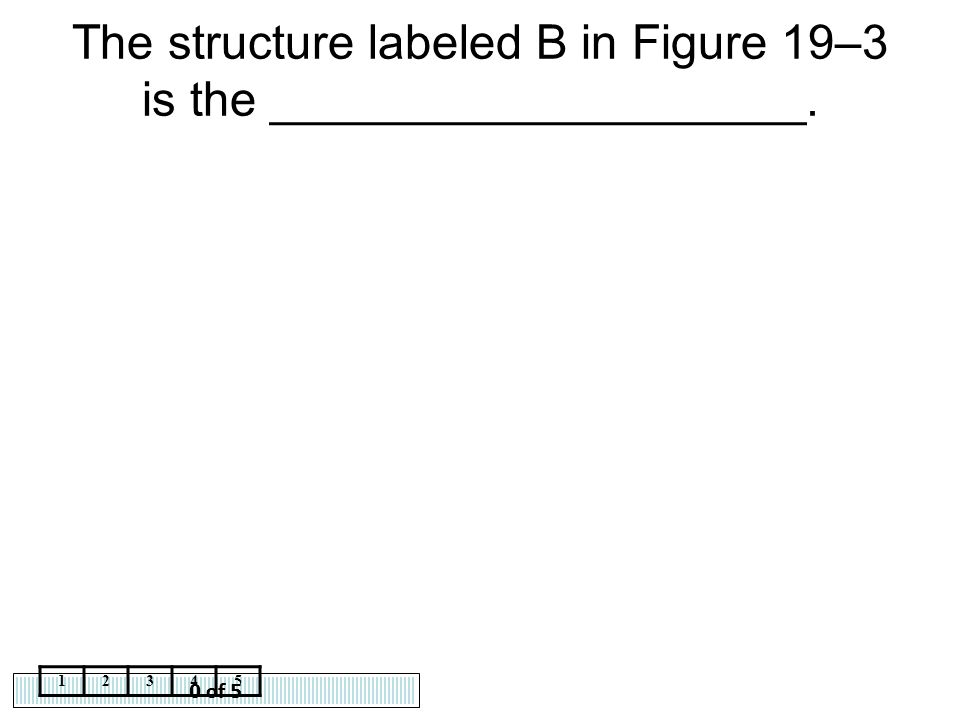The structure labeled B in Figure 19–3 is the ____________________.