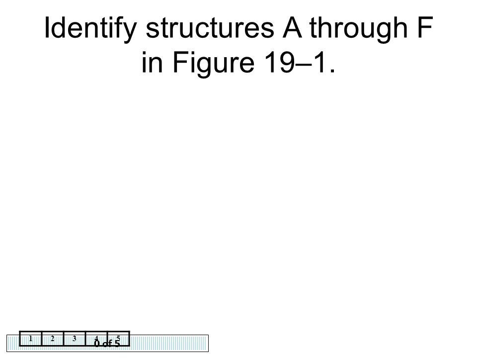 Identify structures A through F in Figure 19–1.