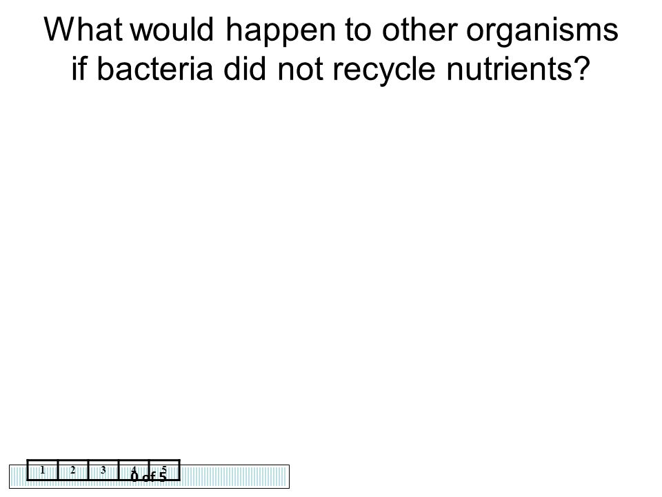 What would happen to other organisms if bacteria did not recycle nutrients