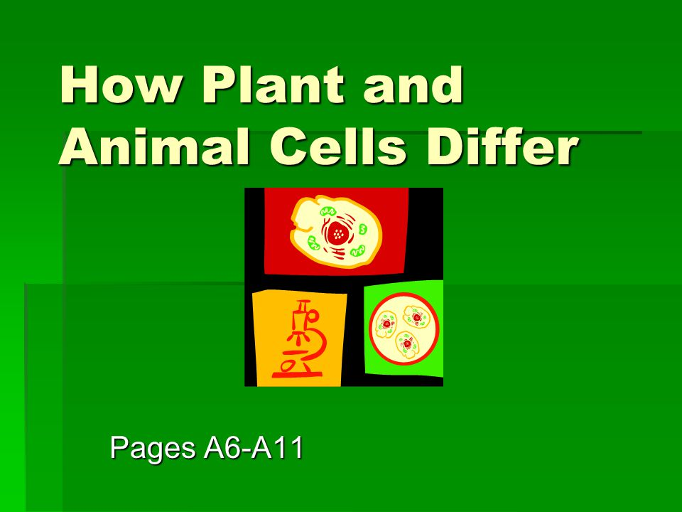 How Plant and Animal Cells Differ